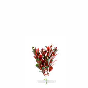 JK Akvarijná rastlina Red Ludwigia 13-16 cm