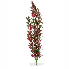 JK Akvarijná rastlina Red Ludwigia 38-43 cm