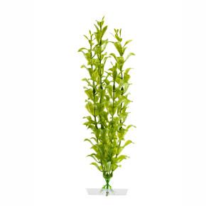 JK Akvarijná rastlina Hygrophila 25-28 cm