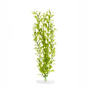 JK Akvarijná rastlina Hygrophila 38-43 cm
