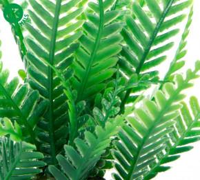 JK ANIMALS Akvarijná rastlinka Papradie mini   © copyright jk animals, všetky práva vyhradené